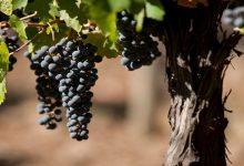 Photo of Rutas del Vino
