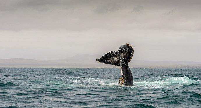 Photo of Avistamiento de ballenas en Chile