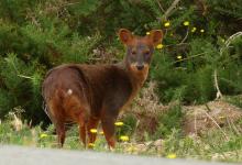 Photo of Descubriendo la Patagonia a través de su fauna