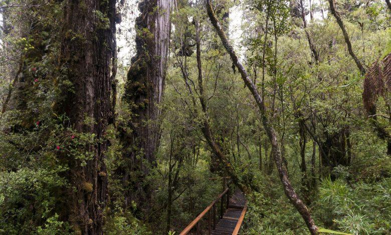 Photo of Anuncian proceso de reapertura gradual de parques nacionales con estrictos protocolos sanitarios